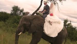 Antelope Park Wedding Venue