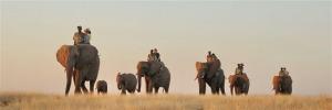 Elephant Back Safaris (Wild Horizons)
