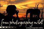 Fun Photography Wild