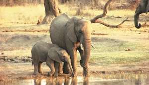 Hwange Lodges and Camping