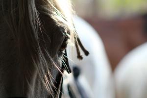 Imvelo Safari Lodges Horse Riding
