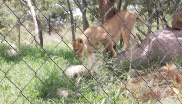 Best Private Game Parks Around Harare