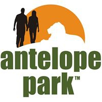 Lion Day and Night Encounter at Antelope Park