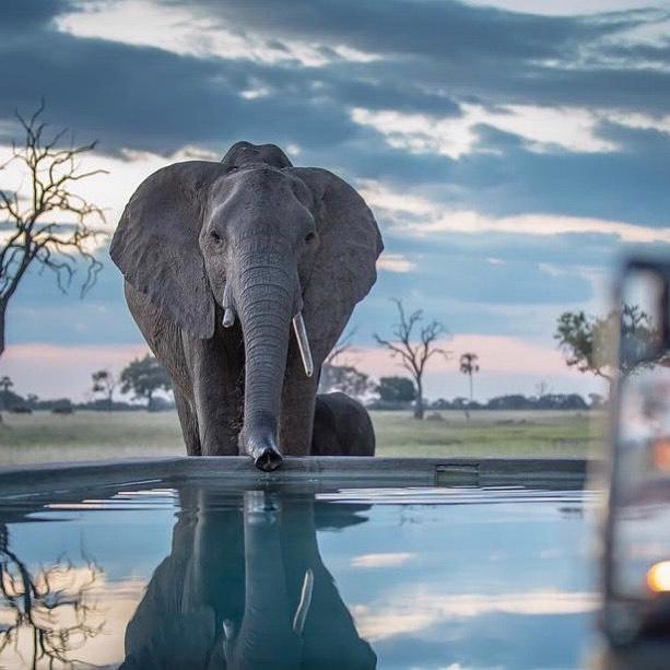 Mavros Safaris