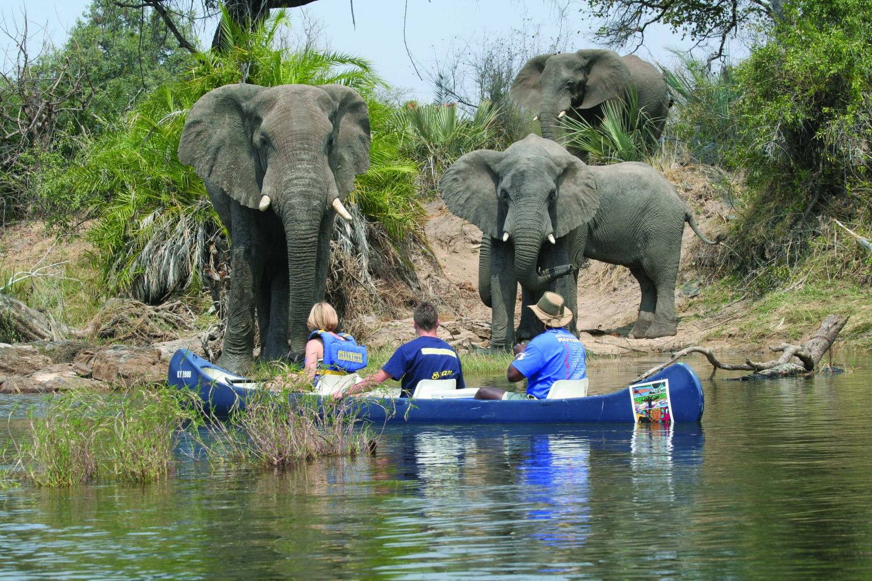 Shearwater Canoeing