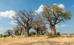 Accommodation In Mana Pools Zimbabwe My Guide Zimbabwe