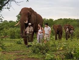 Wildlife Encounters - Mativi Africa