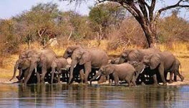 Zambezi National Park Lodges and Camping