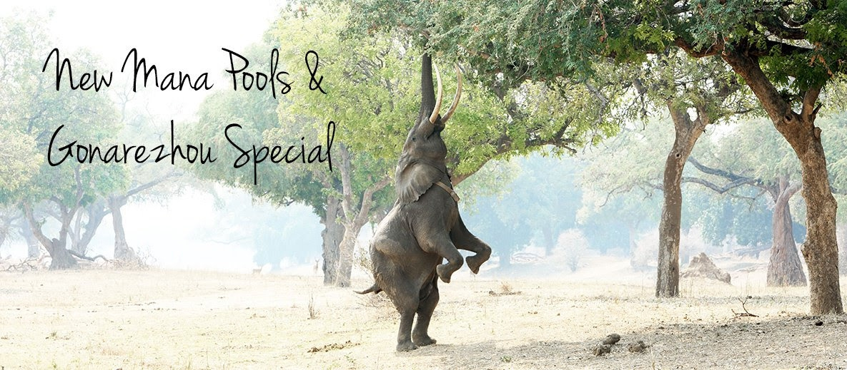 African Bush Camps and Chilo Lodge special For World Tourism Day.