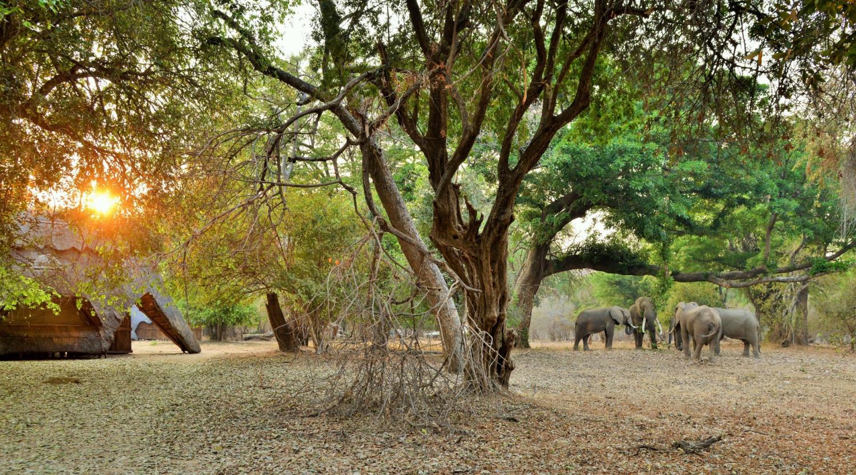 Iconic Zambezi