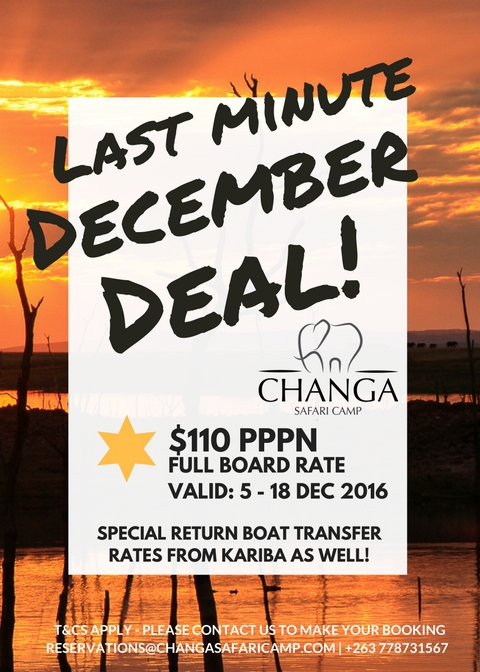 Last Minute December Deal for Changa