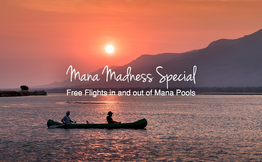 Mana Pools Madness Special At African Bush Camps