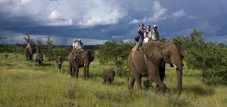Meet the Elephants of Zimbabwe Safari Tour