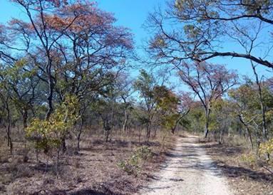 Msasas At Mukuvisi Woodlands This Sunday