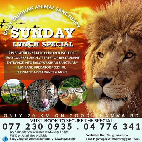 Sunday Lunch Special At Mwanga - Bally Vaughan