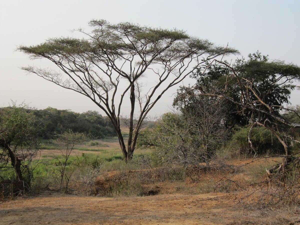 Tree Society of Zimbabwe visit. Ballantyne Park Conservancy