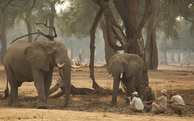 Wilderness Safari's Crazy 30% Off Hwange Summer Special