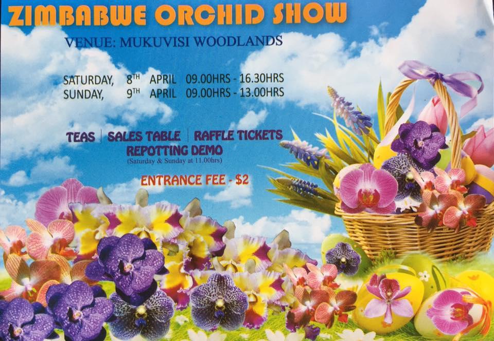 Zimbabwe Orchid Show